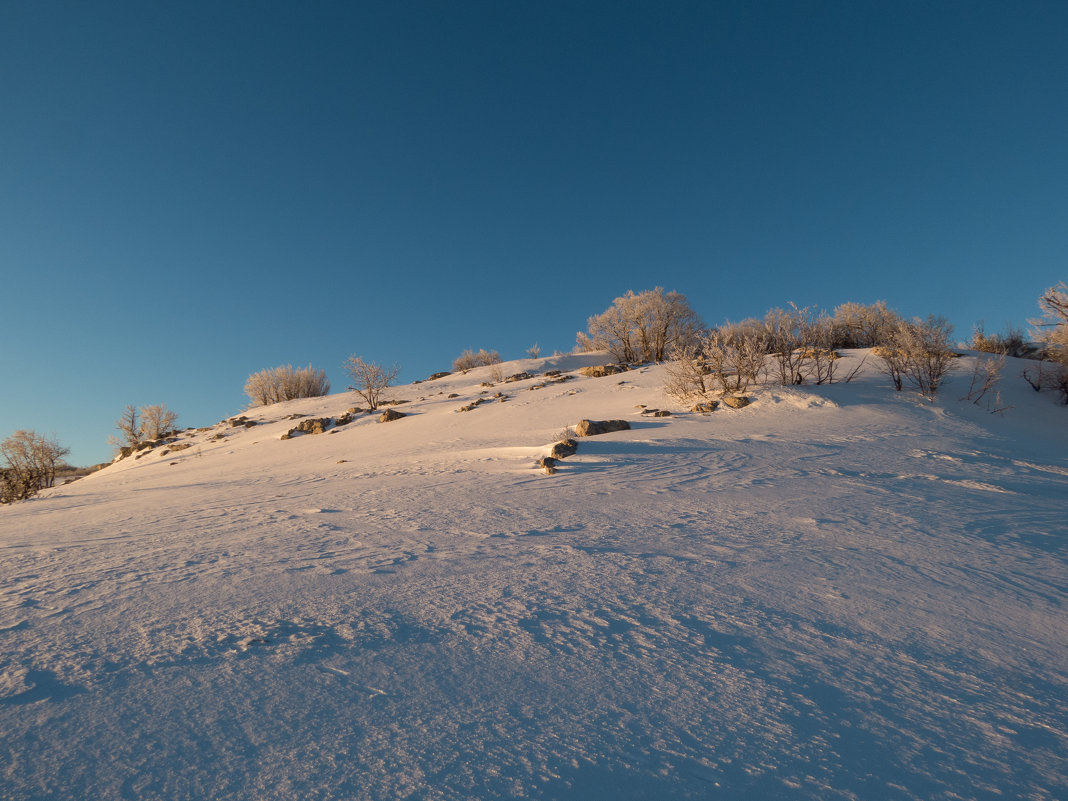 Снежная пустыня - Ксения Репина