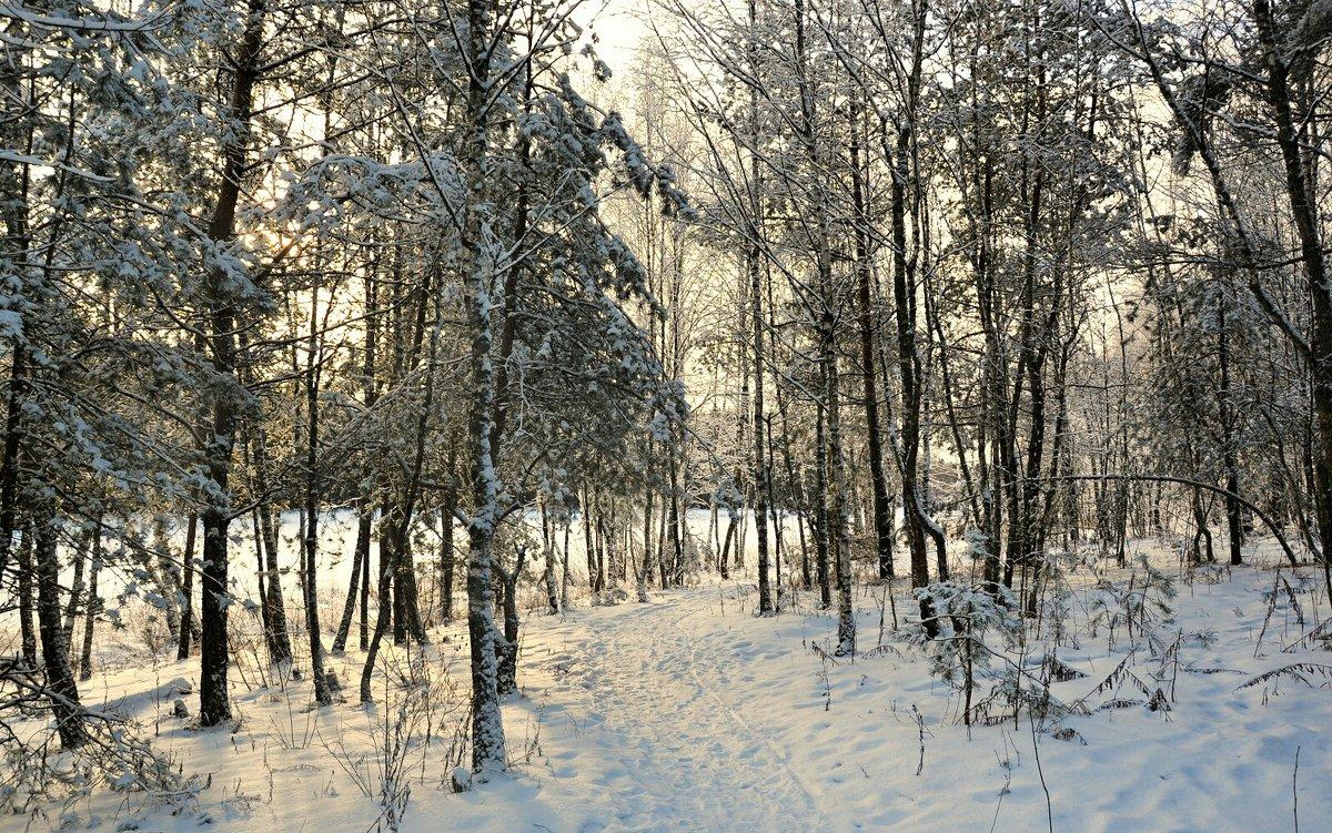 В лесу перед Рождеством - Милешкин Владимир Алексеевич