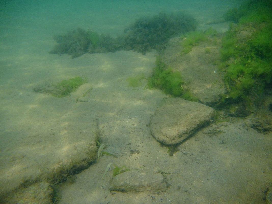 Отдых на море, Крым. Скнорлинг. Подводные пейзажи-56. - Руслан Грицунь