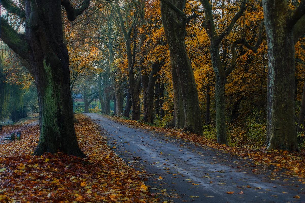 Облетает листва, тают краски осеннего леса, - Юрий. Шмаков