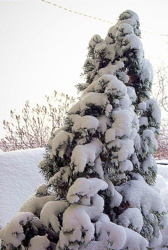 одесская зима - Александр Корчемный