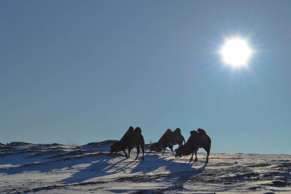 Зимние верблюды - Елена Рекк