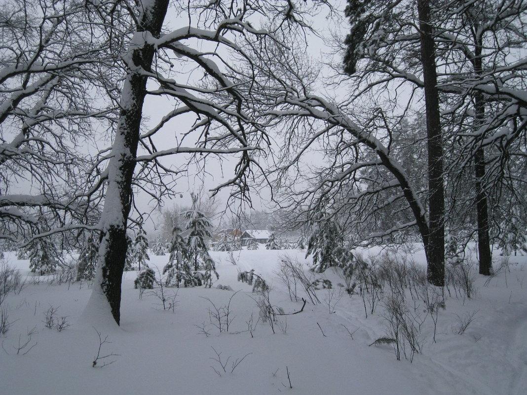 Зимний лес - Юрий Колчин