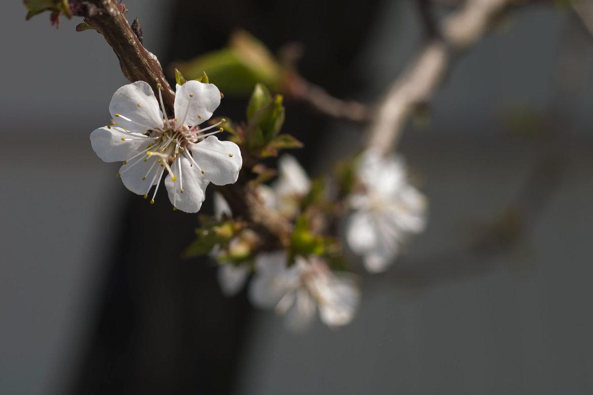через пару месяцев весна! - наталья