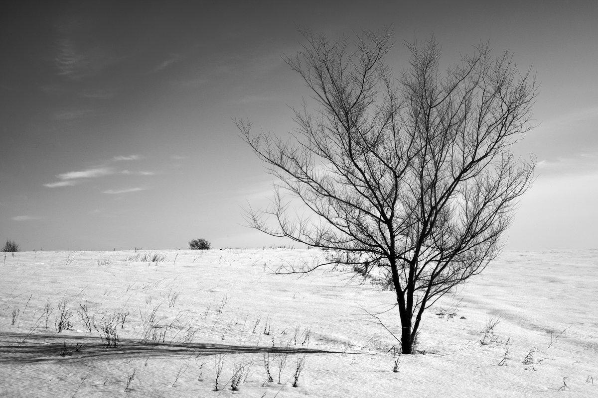 Дерево в поле - Оксана Сергеева
