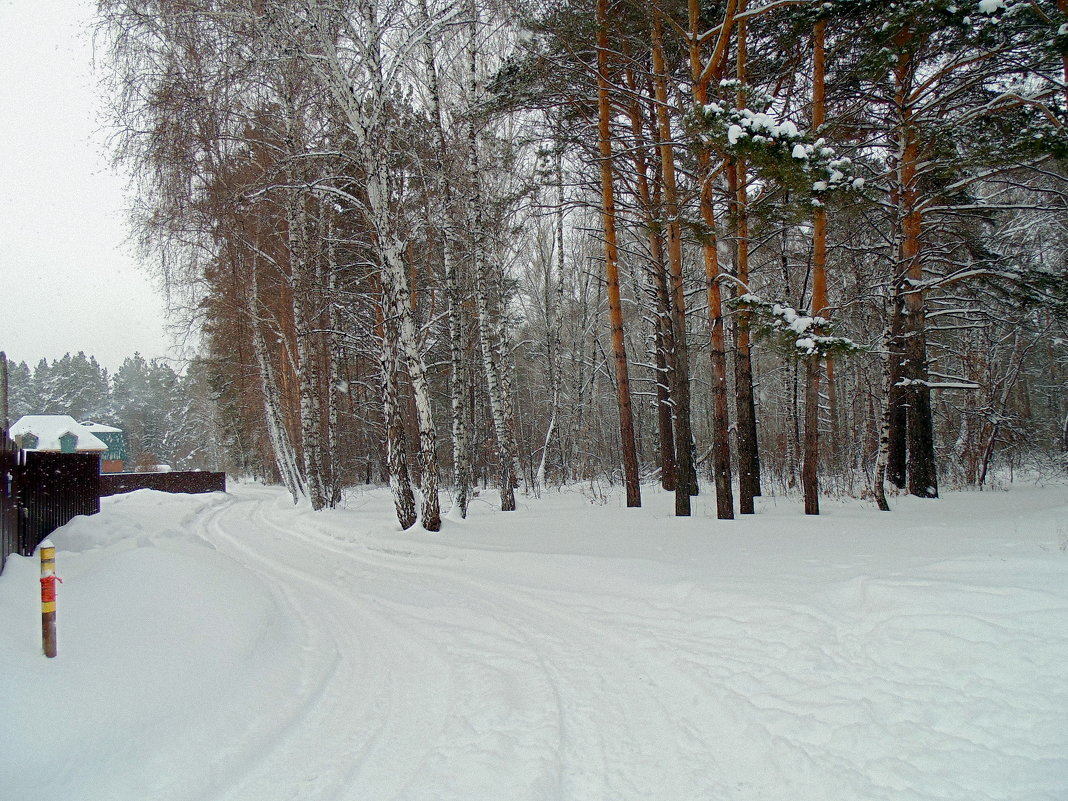 Заходим в лес. - Мила Бовкун