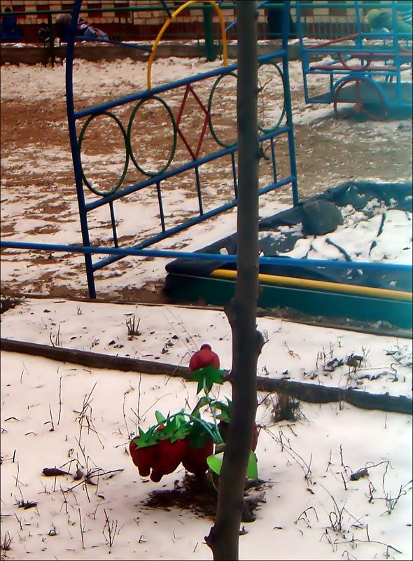 Земляника на снегу - Нина Корешкова