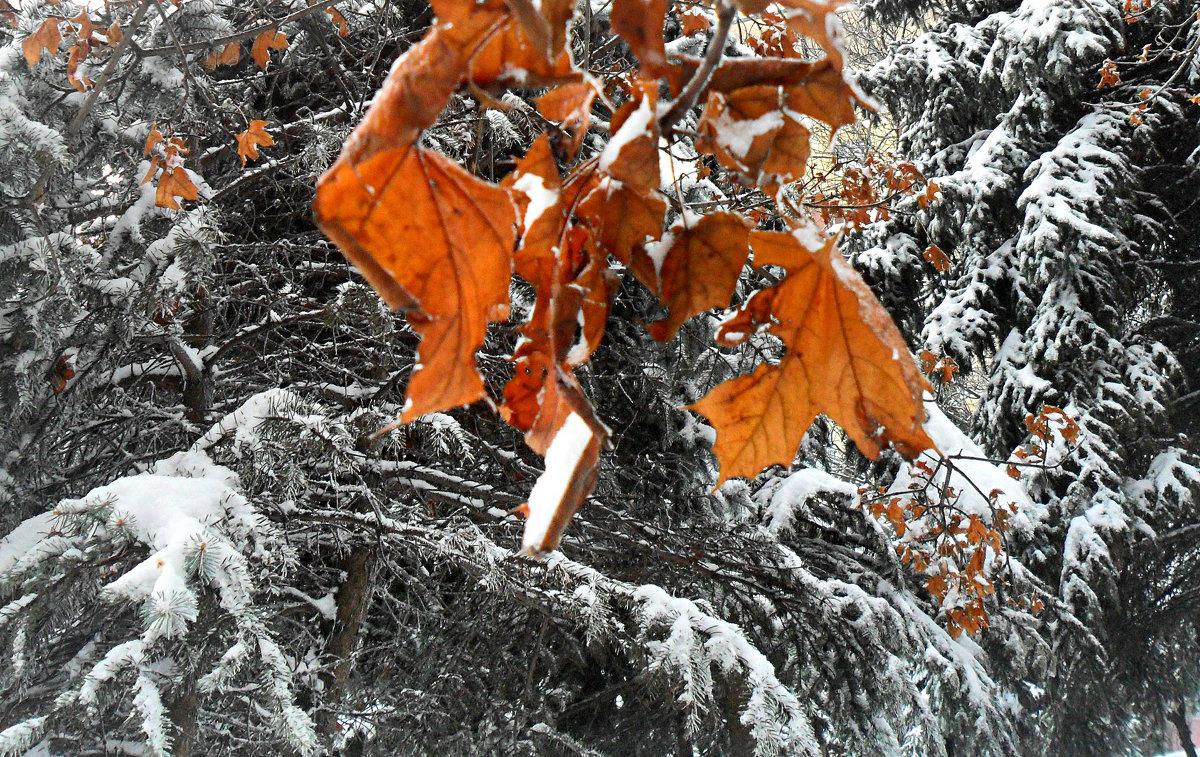 Осенние сполохи! - Наталья