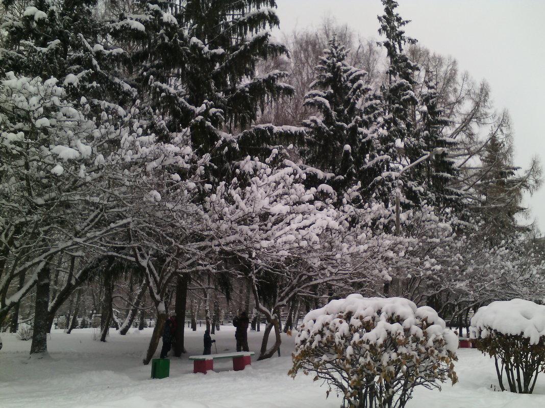 Зимний парк в Коломне. - Ольга Кривых