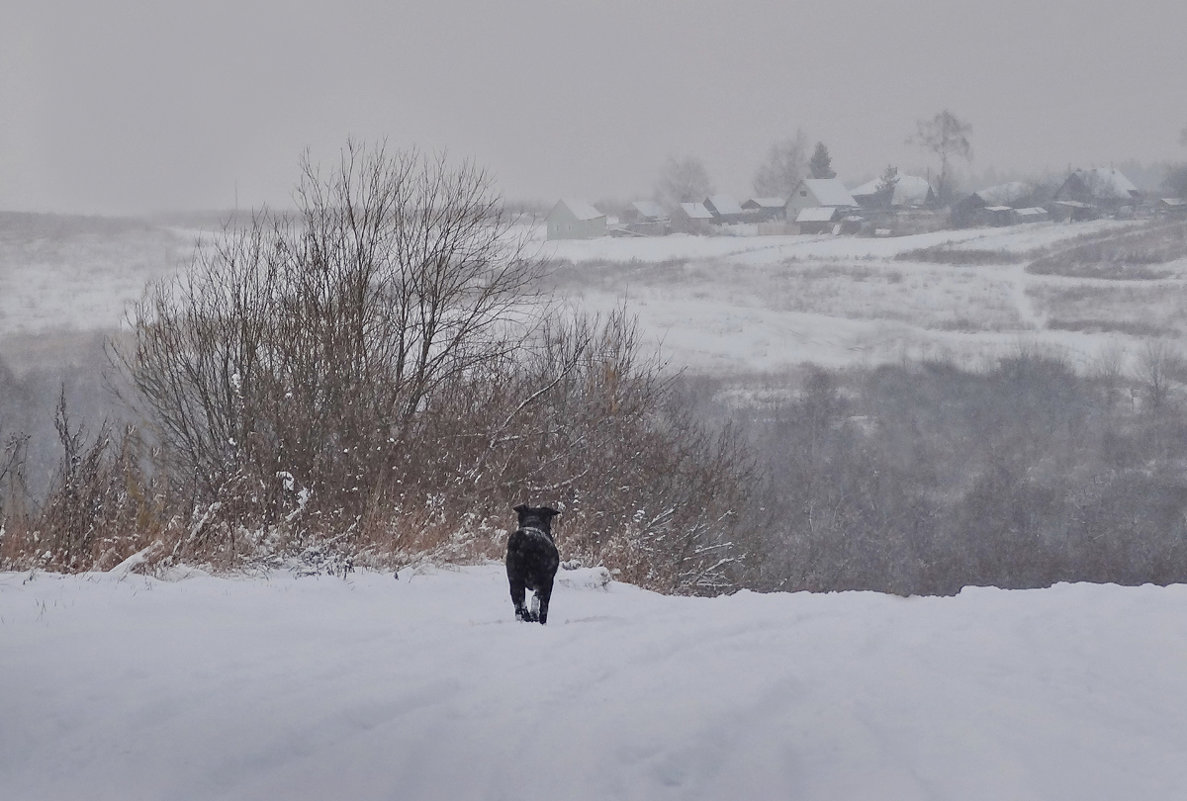 Одинокий путник - Валерий Талашов