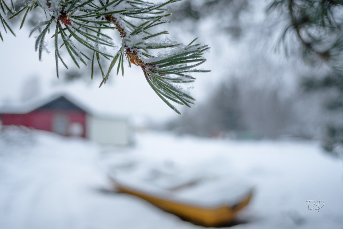 Зимний этюд - Виталий