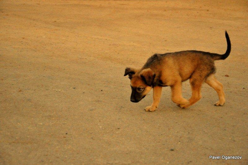 щенок - Павел Оганезов