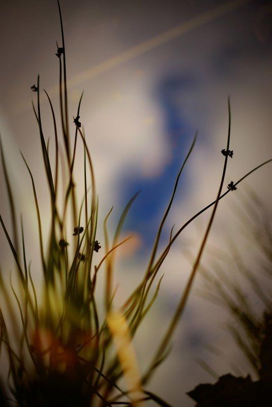 Осень отражение - Sony 2 Sony 2