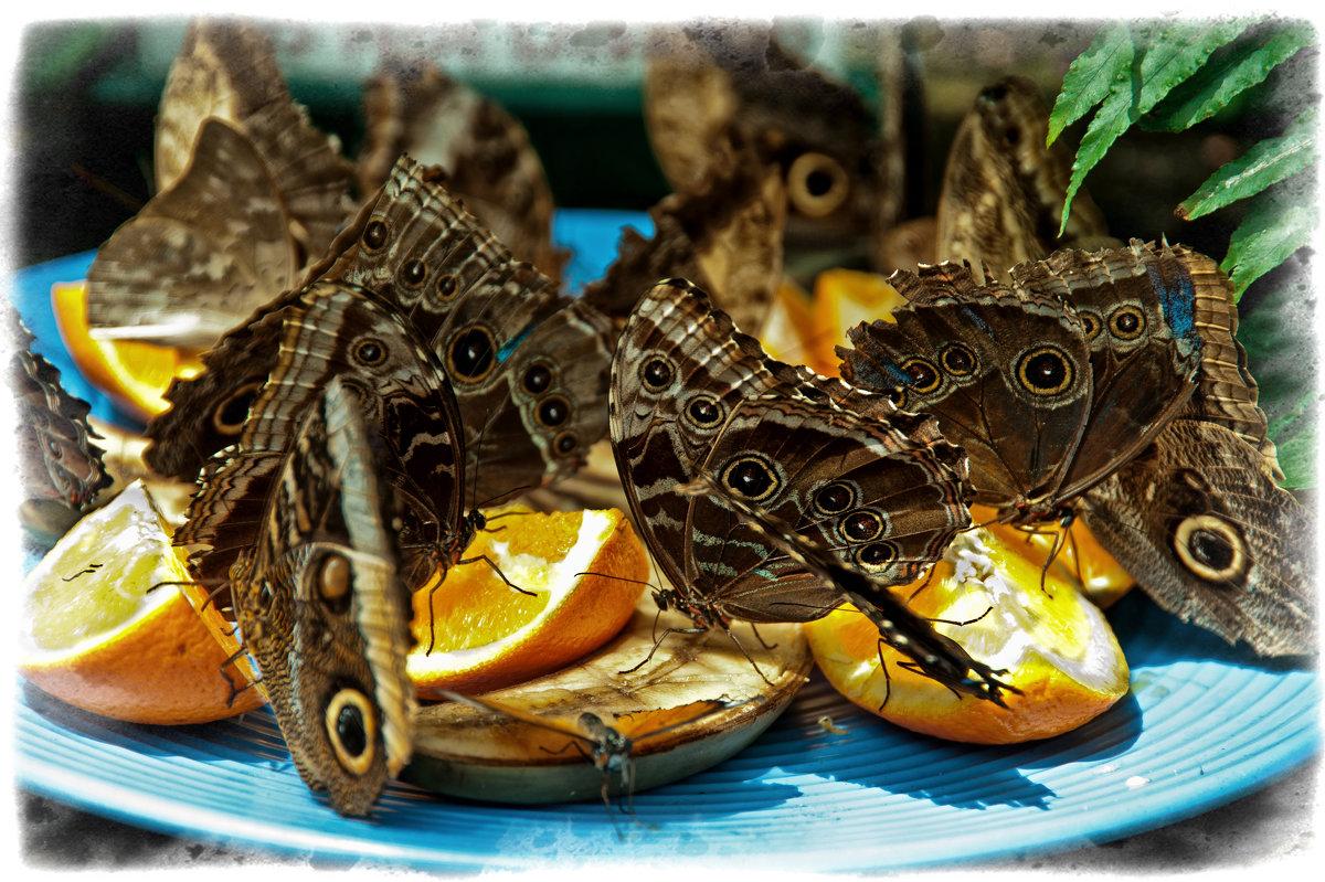 Бабочки, Обед - Alexander Dementev
