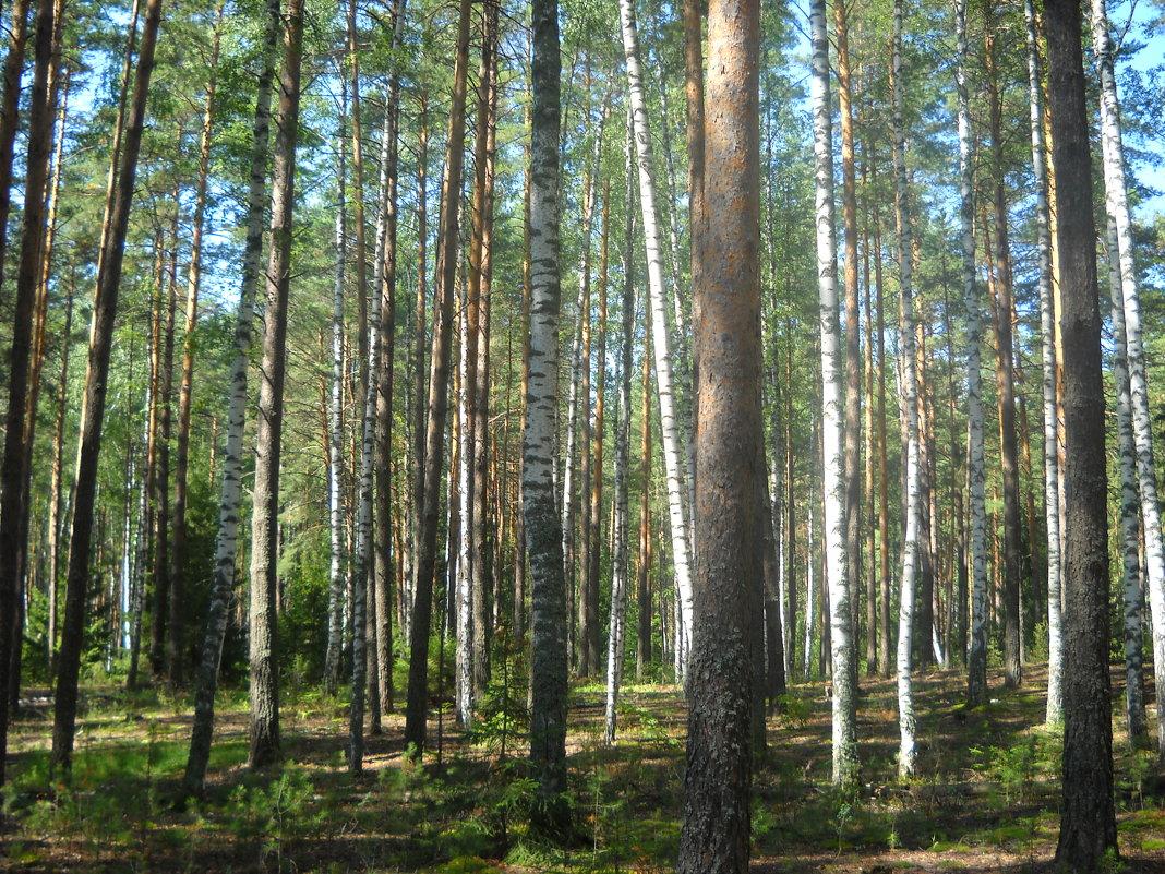 лес - Александр Попков