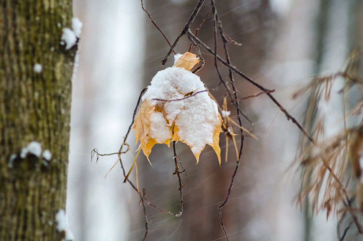 Вспоминая осень - Андрей Щетинин