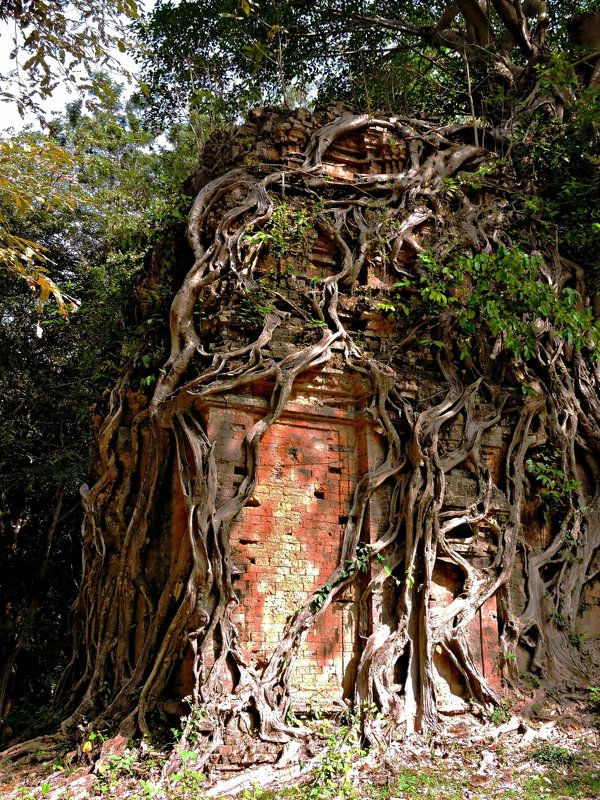 Дерево, поглотившее храм. Самбор Прей Кук (Sambor Prey Kuk) - Tatiana Belyatskaya
