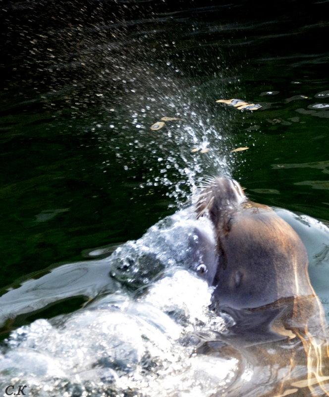 сексуальные игры морских львов 1 - Сергей Короленко