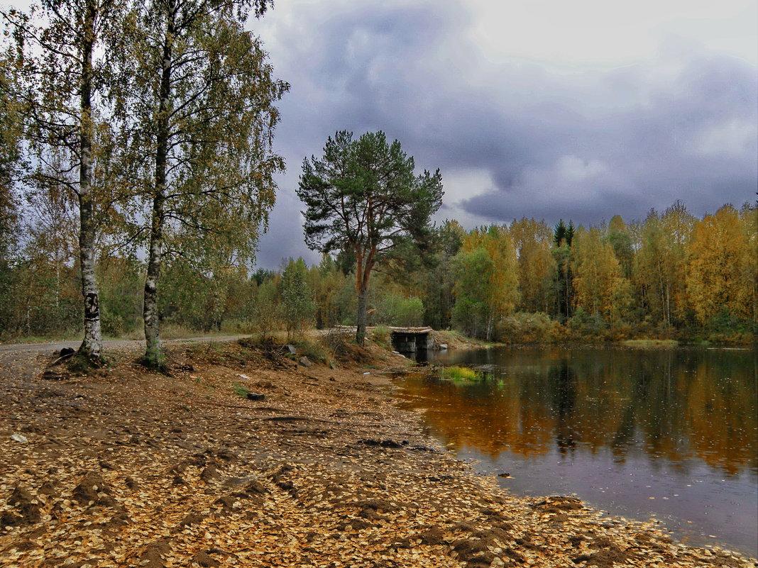 Наша любимая сосна, провожающая нас на рыбалку и встречающая с неё… - Владимир Ильич Батарин