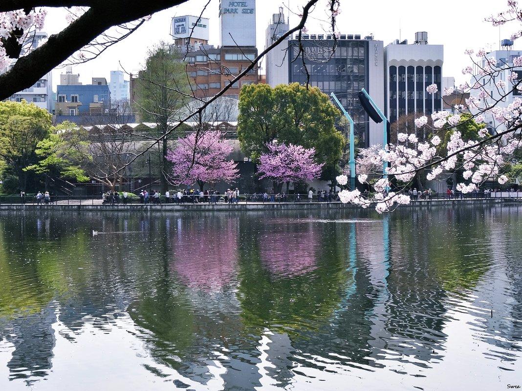 Пруд Синобадзуноикэ Токио - Swetlana V