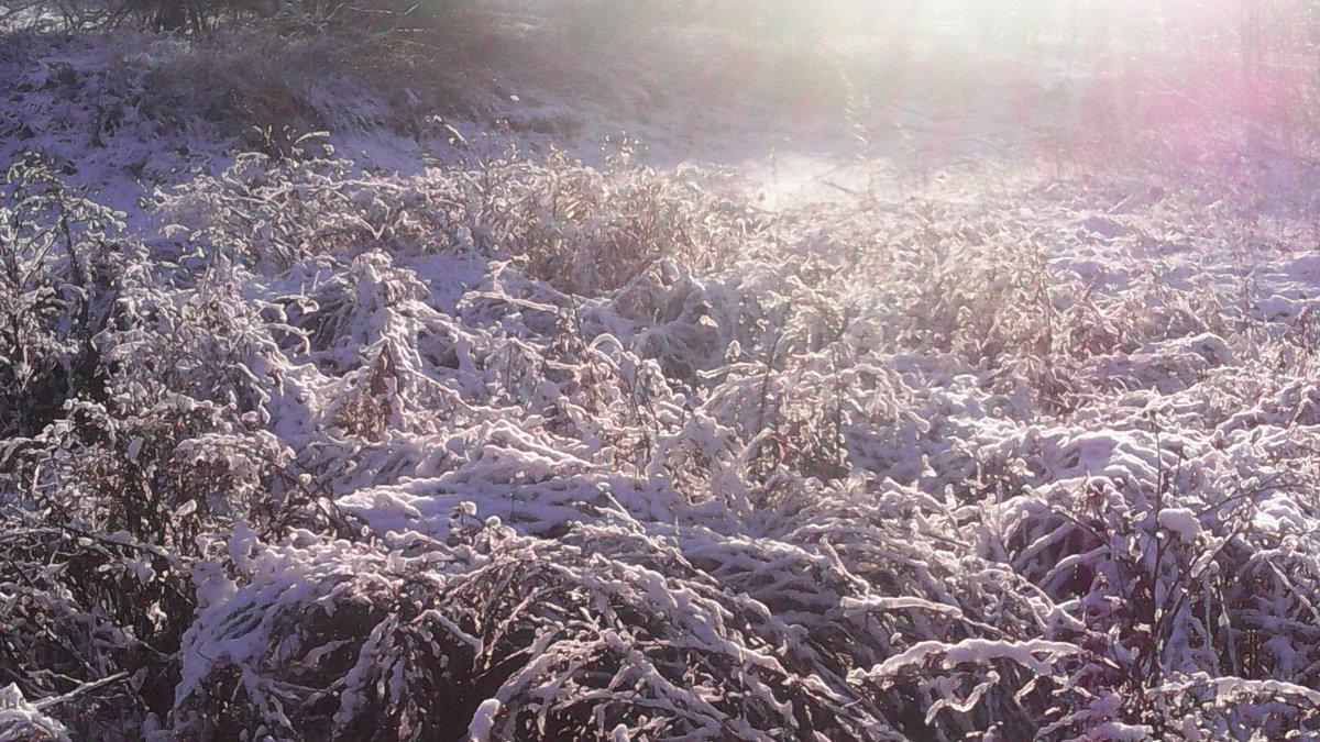 Лужок зимнотравья - Виктор Мухин