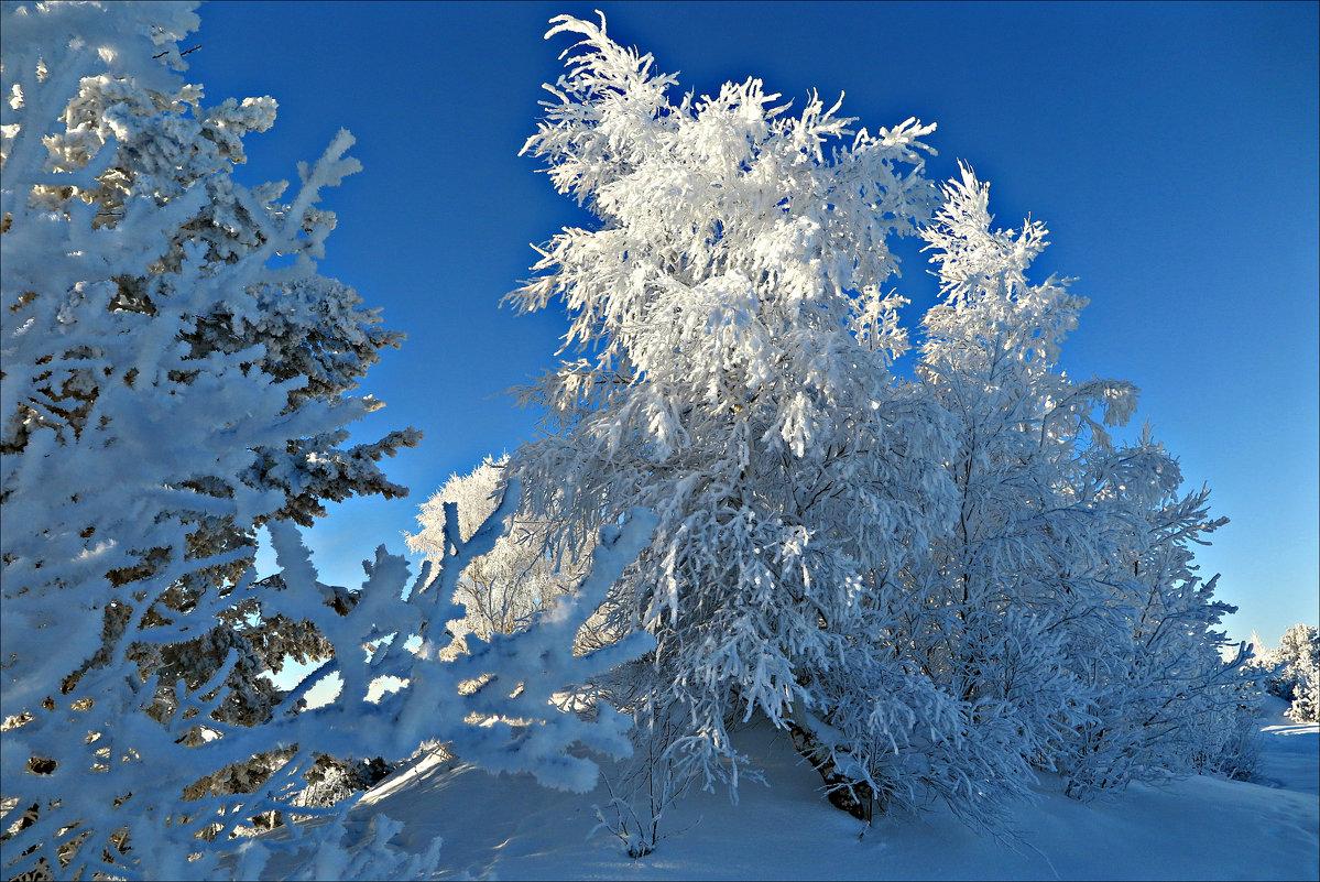 Зимние кружева - Leonid Rutov