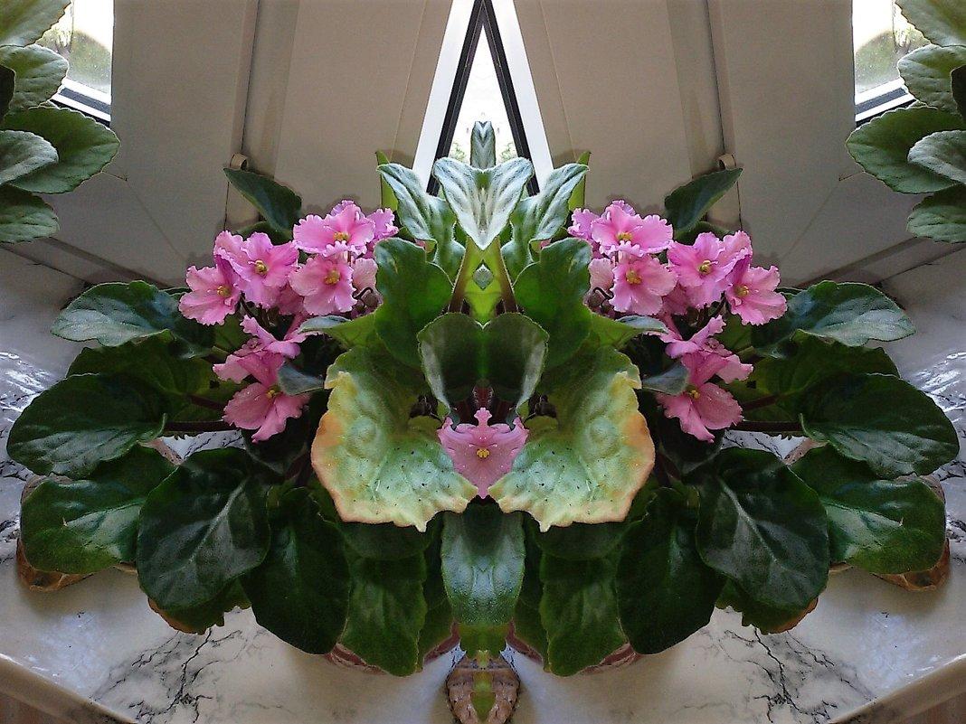 Розовая фиалка - Nina Yudicheva