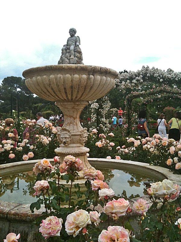 """Здравствуй Мадрид ! Сад  роз""""Rosaleda"""" - Виталий Селиванов"""