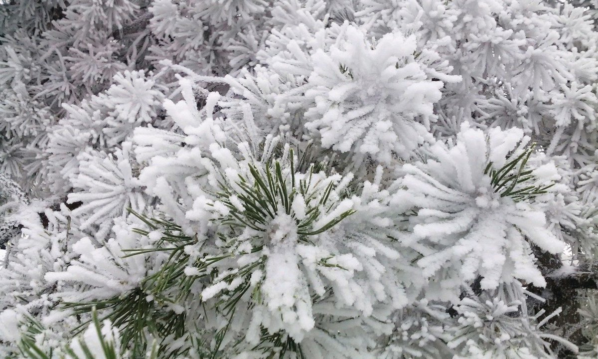 Зима - Сергей Буданов