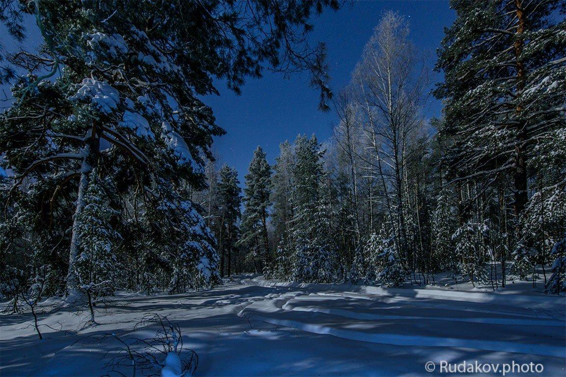 Ночной зимний лес - Сергей