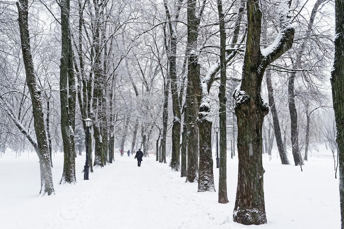 В парке - Павел Сущёнок