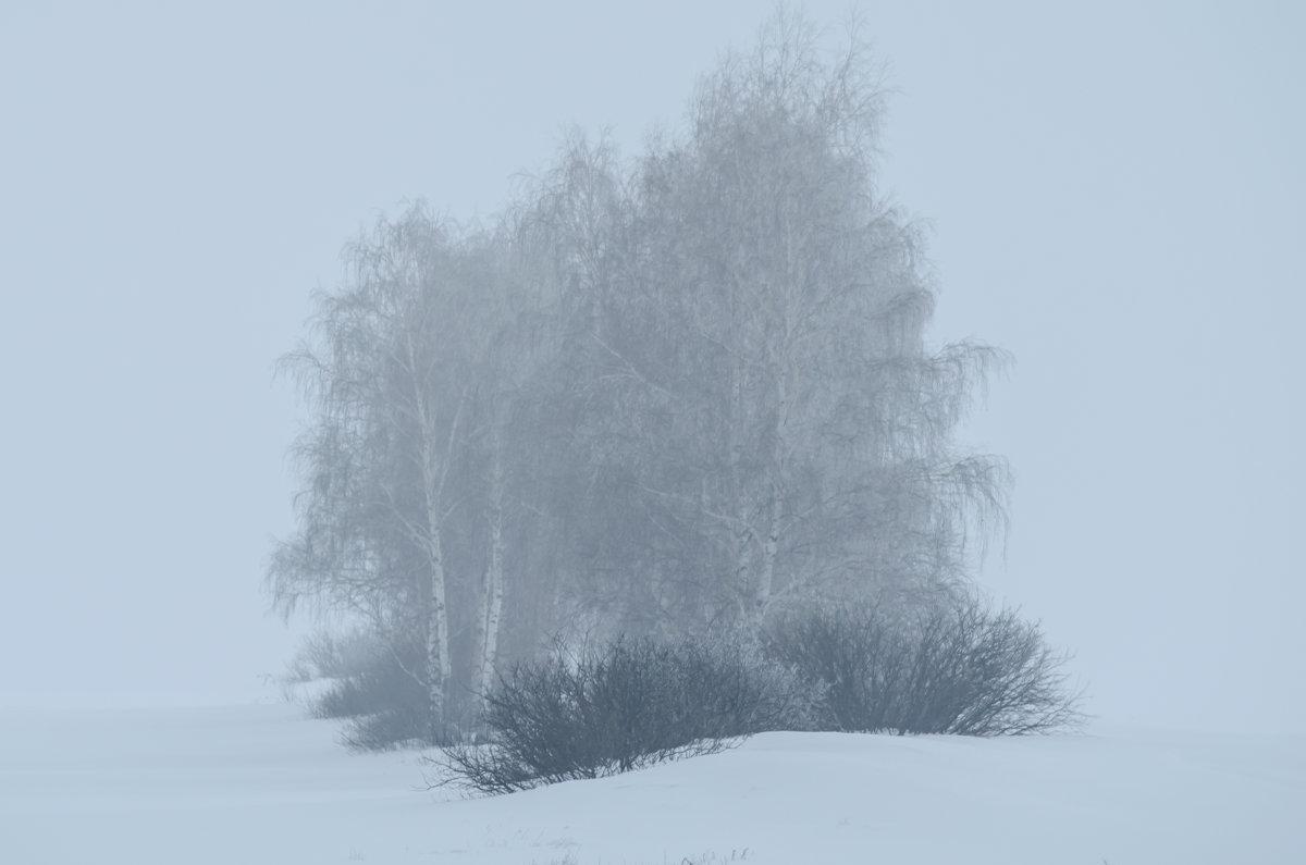 Туман зимой - Андрей Щетинин