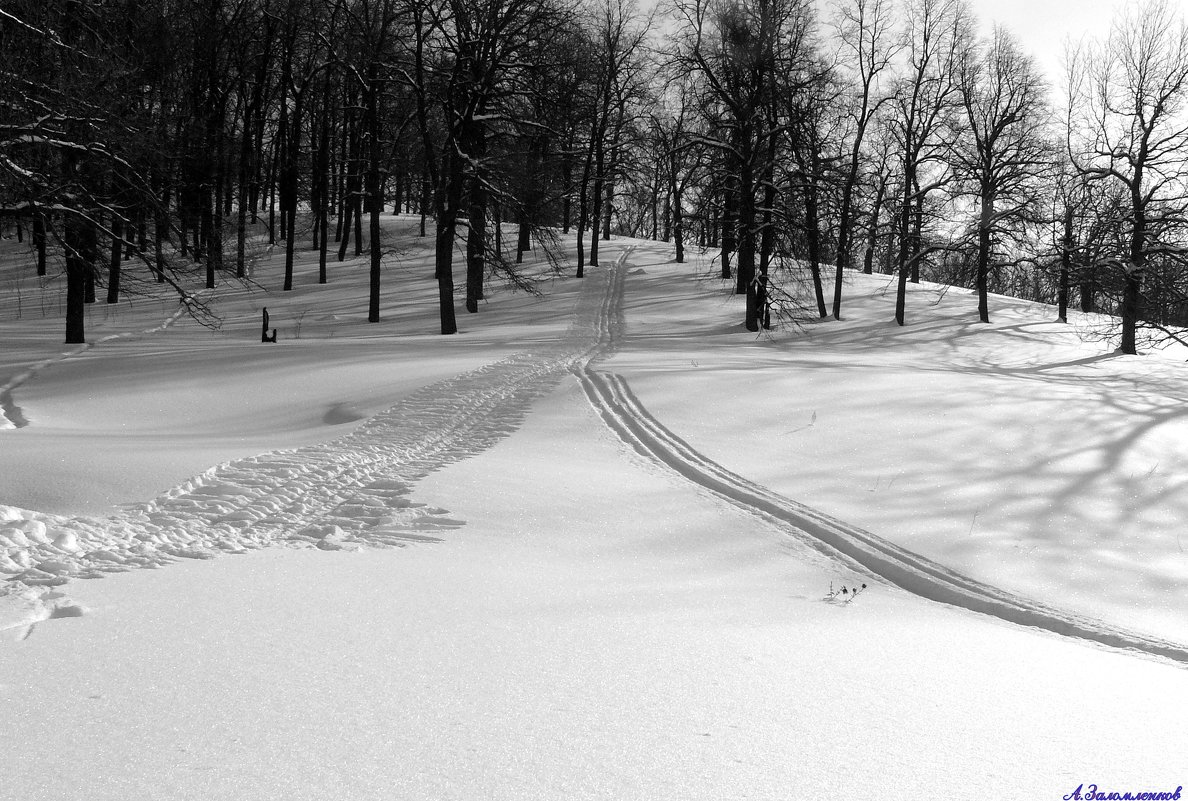 Лыжню прокладывая.. - Андрей Заломленков