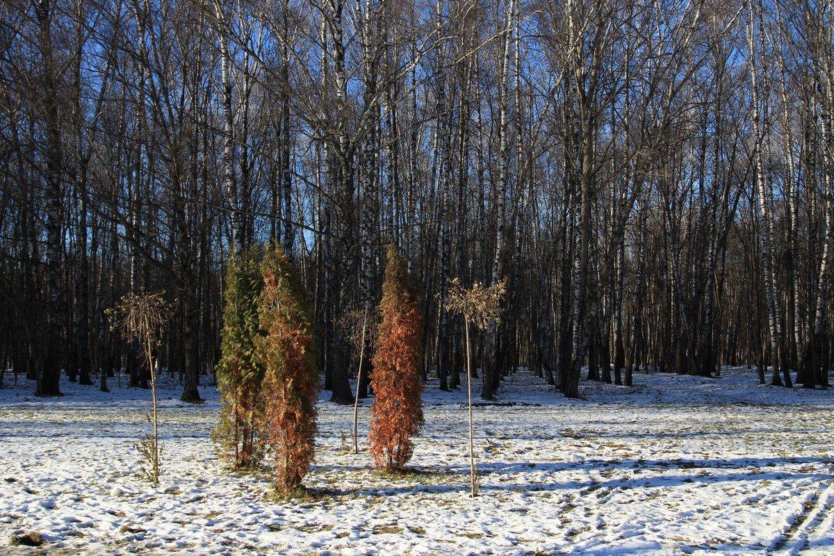 Солнечный ноябрь в Тульском парке. - Инна Щелокова