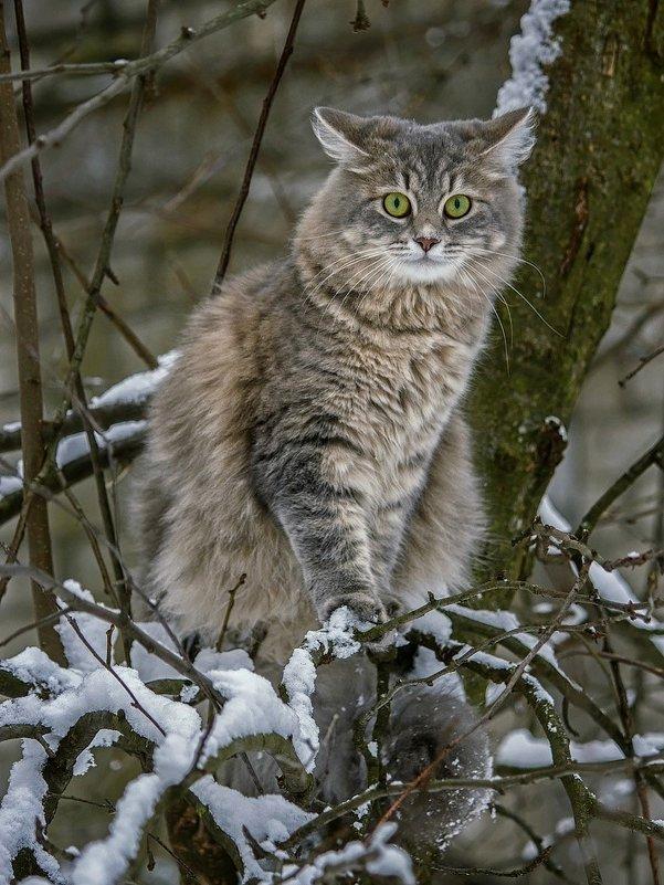 Зимняя фотосессия на дереве - Ирина Приходько