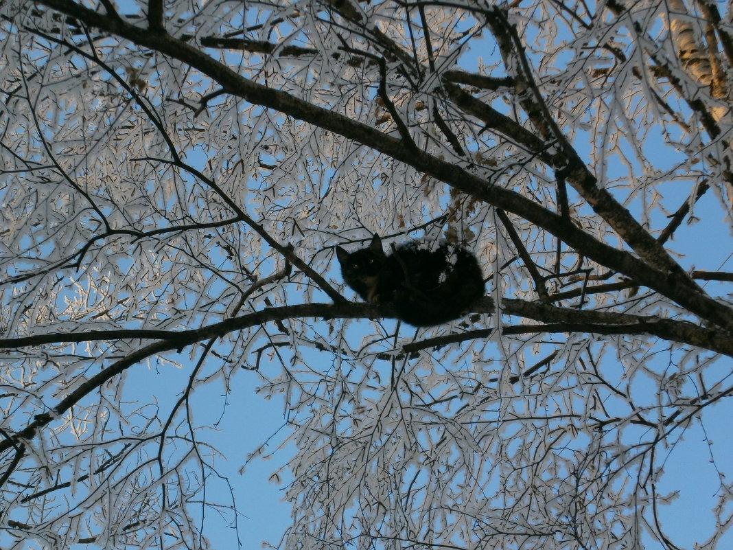 Чёрный кот - Алёна Савина