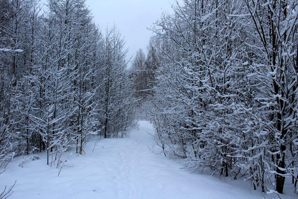 Снежно - Милагрос Экспосито