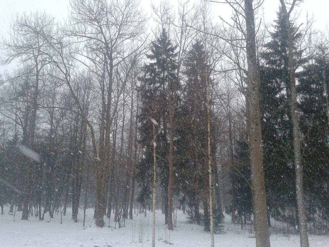Снег - Сапсан