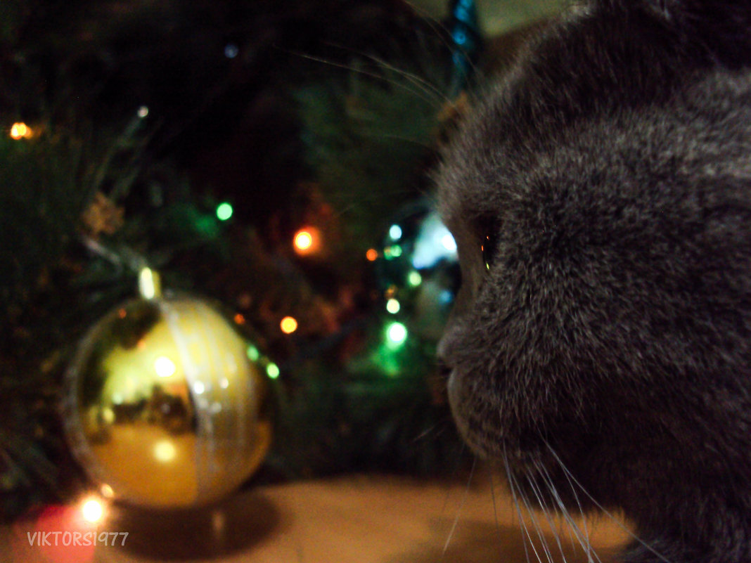 Шар и кошка - Виктор