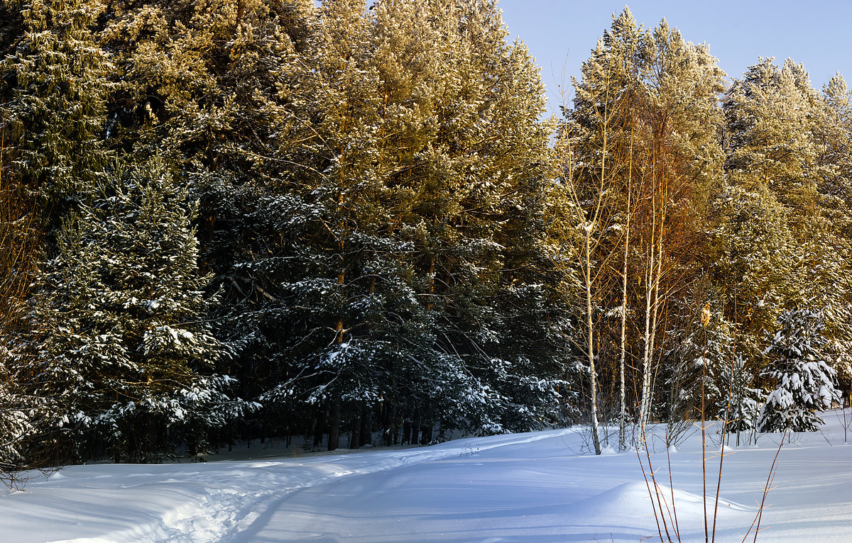 В лесу - Олег Резенов