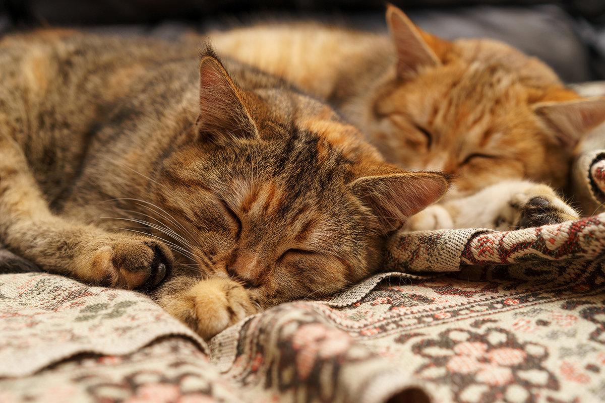 Спят усталые котята.. - Оксана Лада