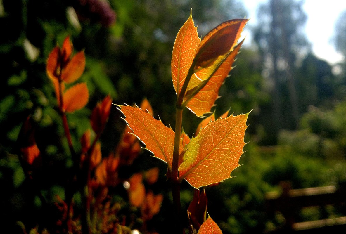майские листики - Александр Прокудин