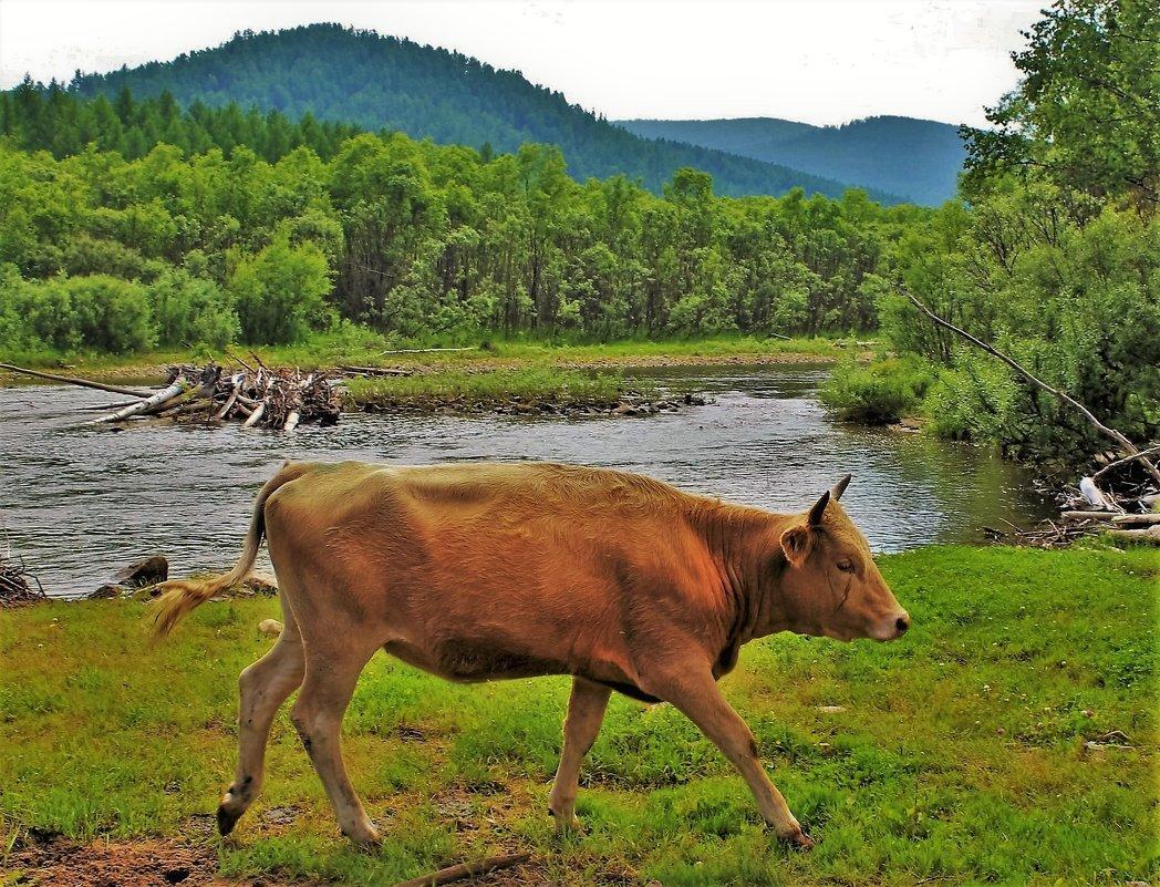 Пейзаж с бегущей коровой - Сергей Чиняев
