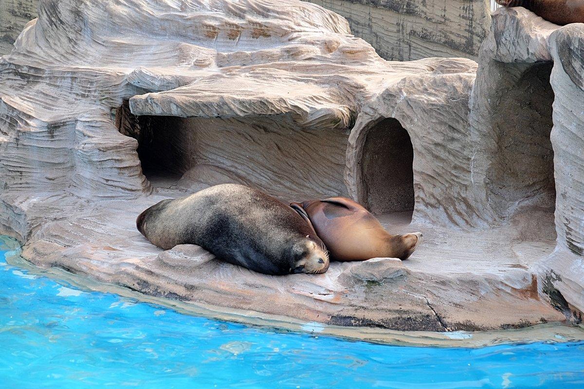 Зоопарк Нагоя Higashiyama Zoo - Swetlana V