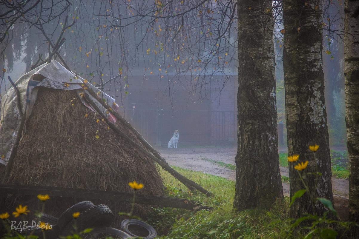 В тумане - dmitriy-vdv