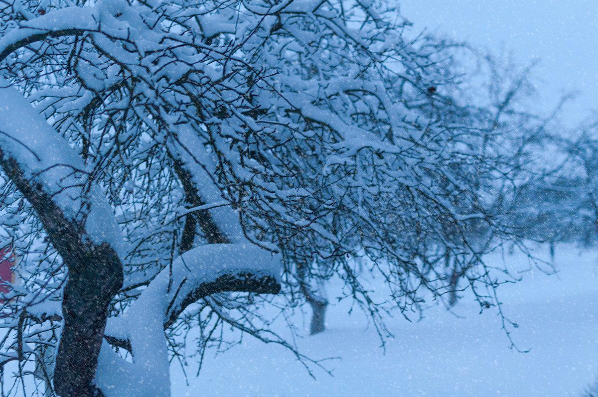 Снегопад в зимнем саду - Анатолий Клепешнёв