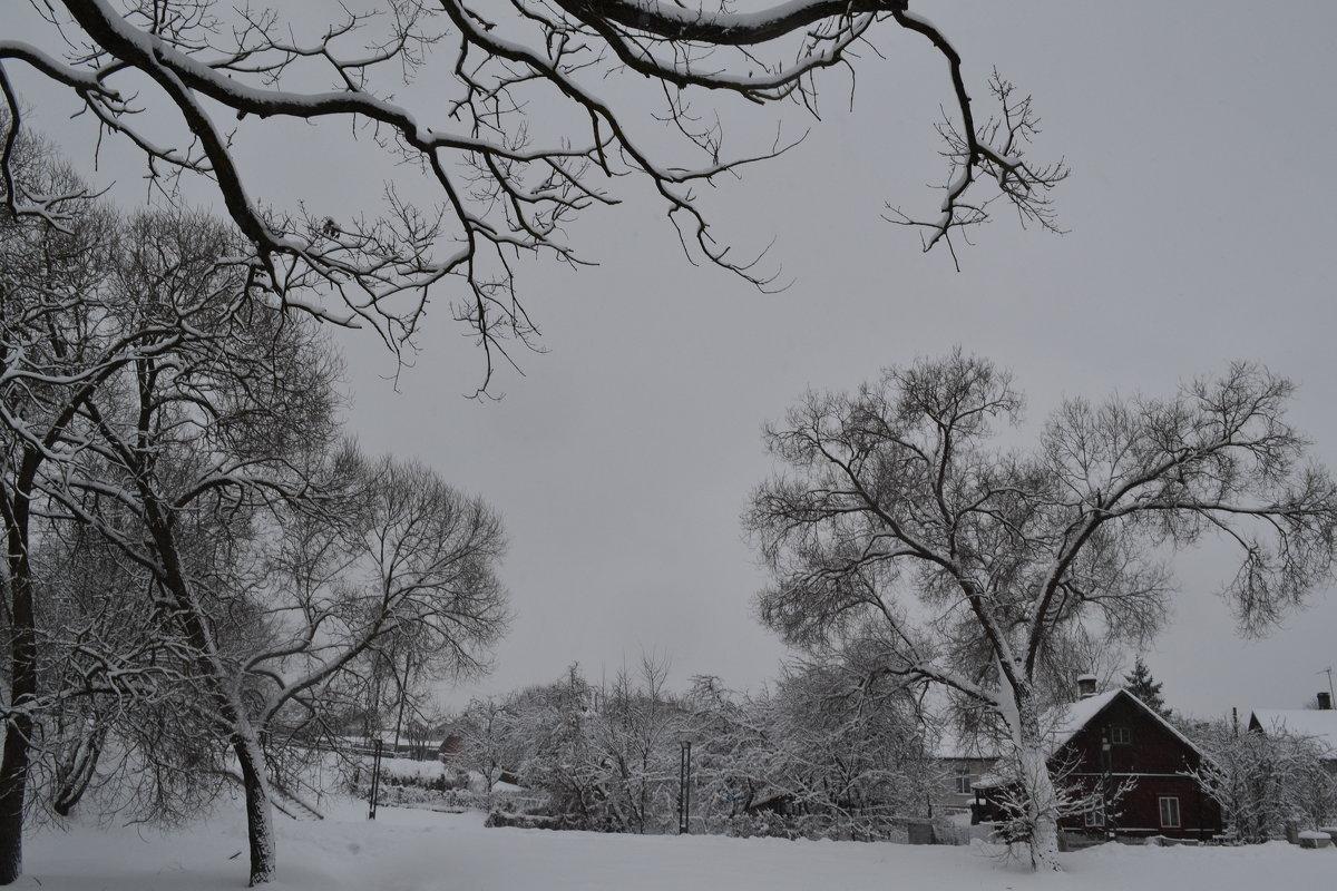 Зимние узоры. - zoja