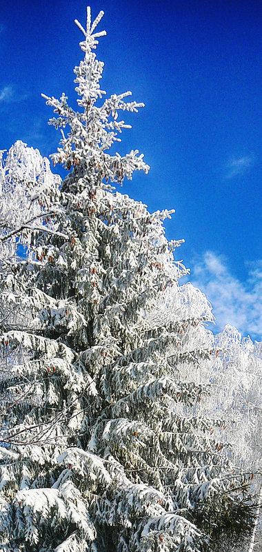 новогоднее - павел бритшев