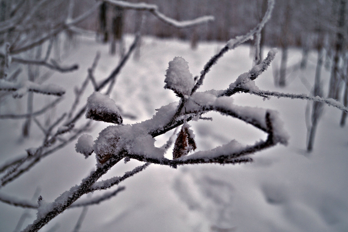 снежная веточка - Валерия Воронова