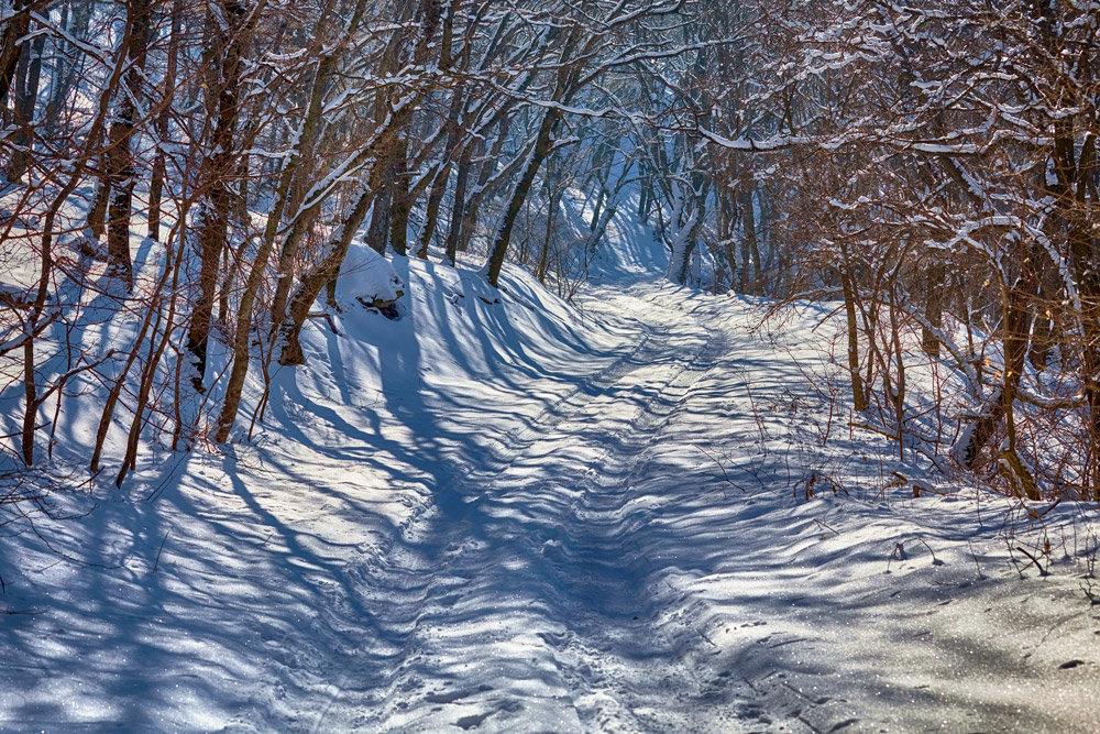 Зима в лесу - Николай Николенко